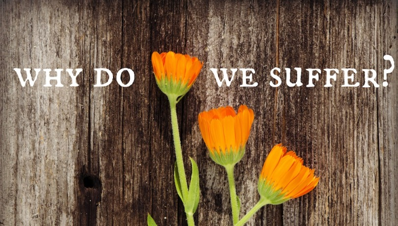 Three flowers on a wooden background with the text 'Why Do We Suffer?'
