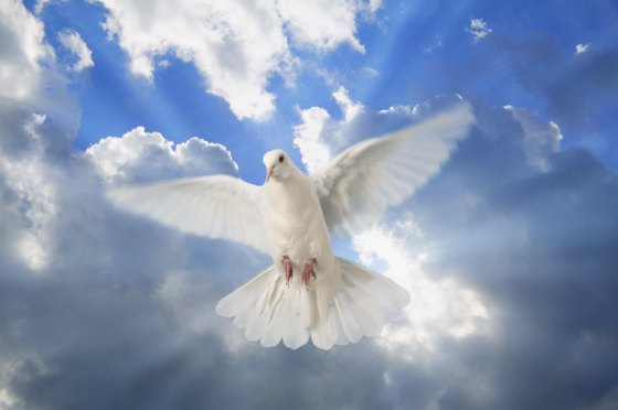 A white dove with a cloudy blue sky in the background