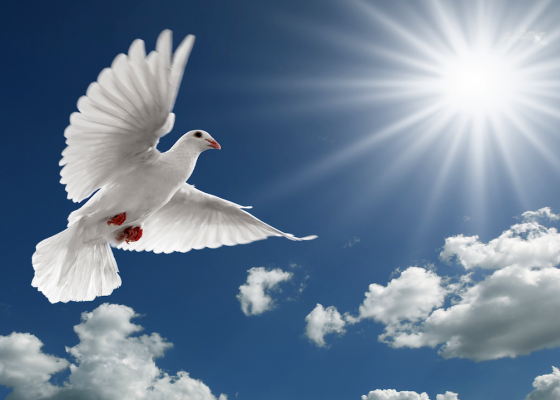 A white dove in front of blue sky with clouds and a bright sun