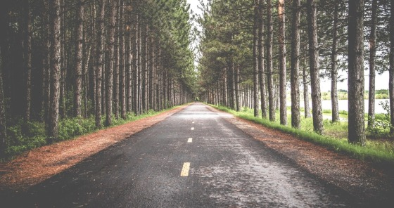A long straight road lined with tall trees on either side