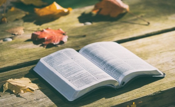 A Bible open on a park bench with autumn leaves also on the surface