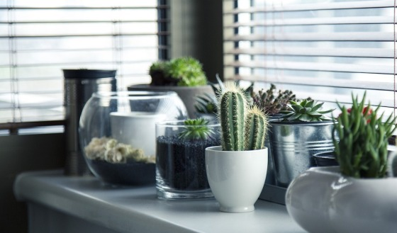 A selection of potted plants on a white table