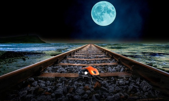 A ladybird on a train track with the moon in the background