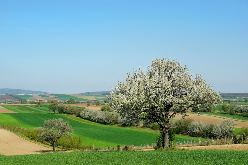 A countryside scene with a tree in the foreground and blue sky in the background