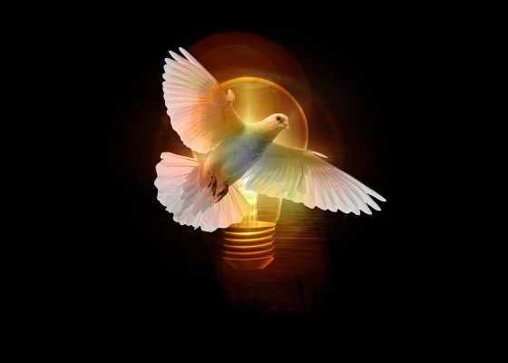 A dove and a light bulb with a black background