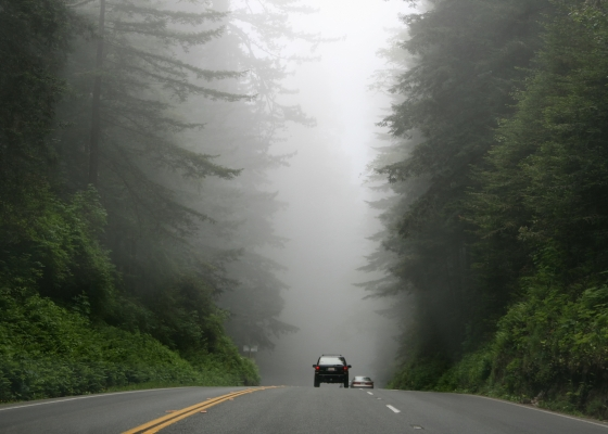 A road with fog in the distance and tall trees on either side